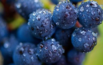 VISCA: Resiliencia Climática en el sector del Vino